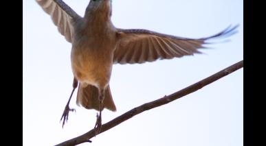 Kim V Goldsmith bird photos The Chaple Project